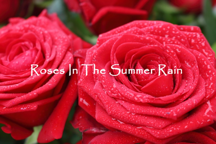 Roses In The Summer Rain