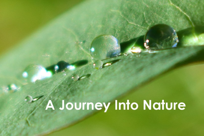 A Journey Into Nature